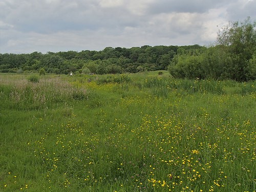 Meadow at Hinchingbrooke Country Park