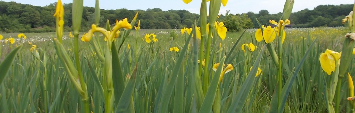 What's on at Hinchingbrooke Country Park this Summer