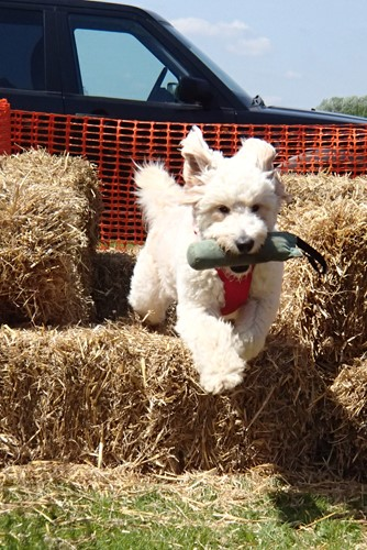 Dog jumping over a hay bale